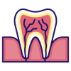 Tooth_anatomy256px